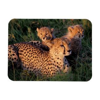 Africa, Kenya, Masai Mara Game Reserve. Cheetah 2 Rectangular Photo Magnet
