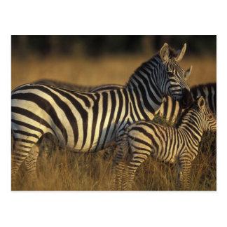 Africa, Kenya, Masai Mara Game Reserve. Plains Postcard