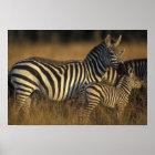 Africa, Kenya, Masai Mara Game Reserve. Plains Poster
