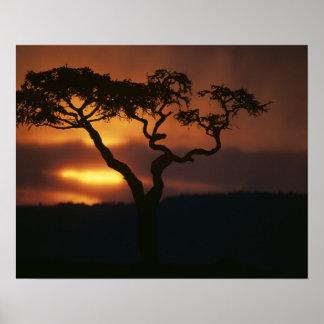 Africa, Kenya, Masai Mara Game Reserve, Setting Poster