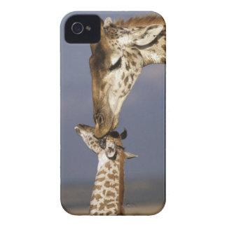 Africa, Kenya, Masai Mara. Giraffes (Giraffe iPhone 4 Case