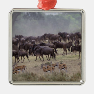 Africa, Kenya, Masai Mara. Herds of Gazelle, Silver-Colored Square Ornament
