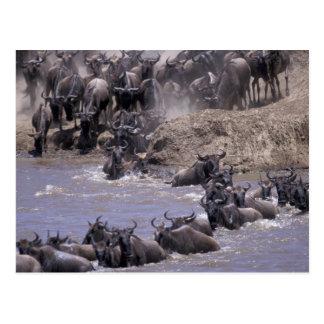 Africa, Kenya, Masai Mara National Park. Postcard