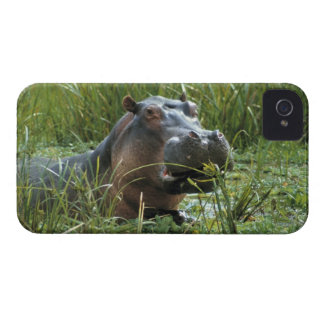 Africa, Kenya, Masai Mara NR. A mother hippo and iPhone 4 Case-Mate Cases