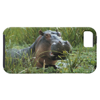 Africa, Kenya, Masai Mara NR. A mother hippo and iPhone 5 Cases