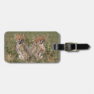 Africa; Kenya; Masai Mara; Three cheetah cubs Luggage Tag