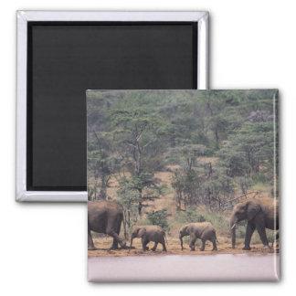 Africa, Kenya, Nanyuki, Mpala. African Square Magnet