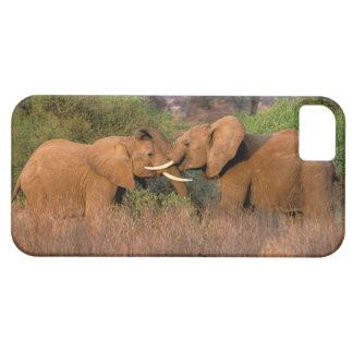 Africa, Kenya, Samburu. Elephant challenge Case For The iPhone 5