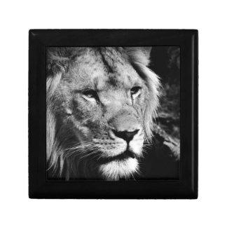 africa lion male closeup macro gift box