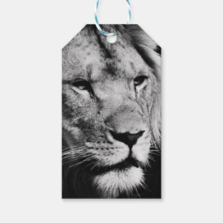 africa lion male closeup macro gift tags