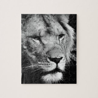 africa lion male closeup macro jigsaw puzzle