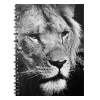 africa lion male closeup macro notebook