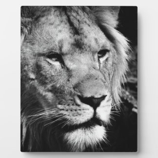 africa lion male closeup macro plaque