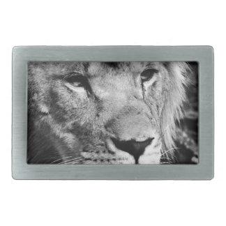 africa lion male closeup macro rectangular belt buckle