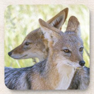 Africa, Namibia, Etosha National Park Coaster