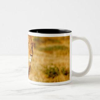 Africa, Namibia, Okonjima. Lone male lion. Two-Tone Coffee Mug
