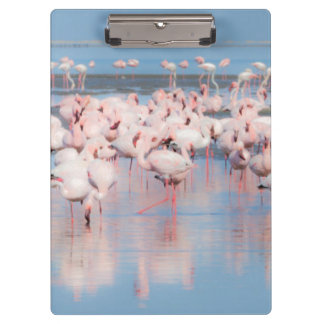 Africa, Namibia, Walvis Bay Clipboards