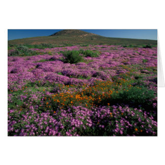 Africa, South Africa, Namaqualand, Orange and Card