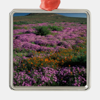 Africa, South Africa, Namaqualand, Orange and Silver-Colored Square Ornament