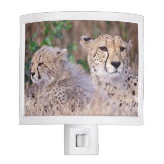 Africa, South Africa, Tswalu Reserve. Cheetahs Nite Lights