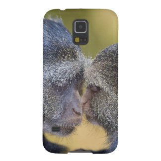 Africa. Tanzania. Blue Monkey mother with young Galaxy S5 Covers