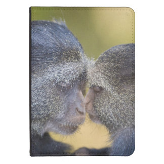 Africa. Tanzania. Blue Monkey mother with young Kindle Touch Cover