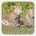 Africa. Tanzania. Cheetah mother and cubs 2 Sticker