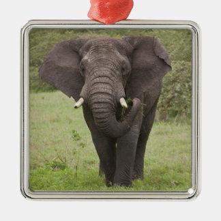 Africa. Tanzania. Elephant at Ngorongoro Crater, Metal Ornament