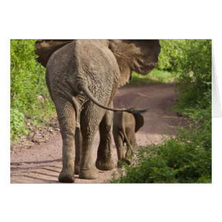 Africa. Tanzania. Elephant mother and calf at Card