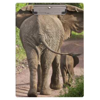 Africa. Tanzania. Elephant mother and calf at Clipboard