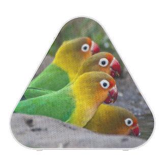 Africa Tanzania Fischer s Lovebirds drinking Bluetooth Speaker