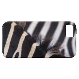 Africa, Tanzania, Ngorongoro conservation area, iPhone 5 Case