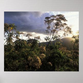 Africa, Tanzania, Ngorongoro Conservation Area, Posters