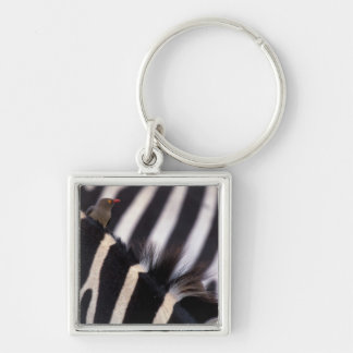 Africa, Tanzania, Ngorongoro conservation area, Silver-Colored Square Keychain