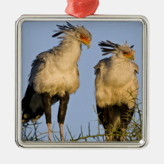 Africa. Tanzania. Secretary Birds at Ndutu in Metal Ornament