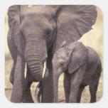 Africa, Tanzania, Tarangire National Park. 2 Square Sticker