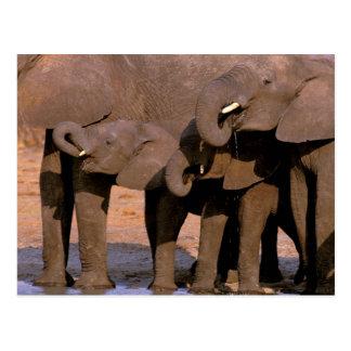 Africa, Tanzania, Tarangire National Park. Postcard