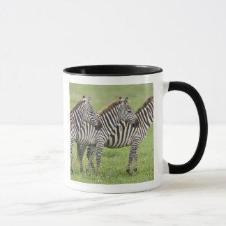 Africa. Tanzania. Zebras at Ngorongoro Crater in Mug