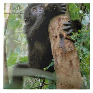 Africa, Uganda, Bwindi Impenetrable Forest Tile