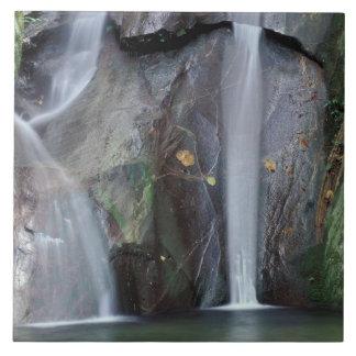 Africa, Uganda, Bwindi Impenetrable rainforest, Ceramic Tile