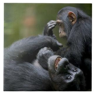 Africa, Uganda, Kibale Forest Reserve, Juvenile 2 Tiles