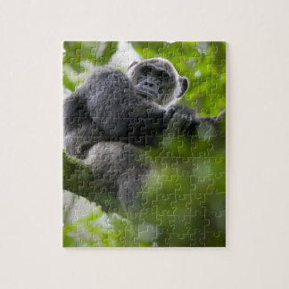 Africa, Uganda, Kibale Forest Reserve, Portrait 2 Jigsaw Puzzles