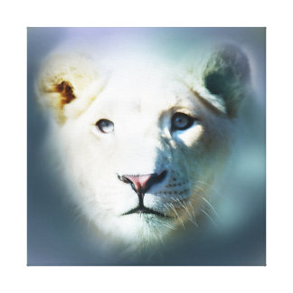 Africa White Lion Blue Eyes Canvas Print