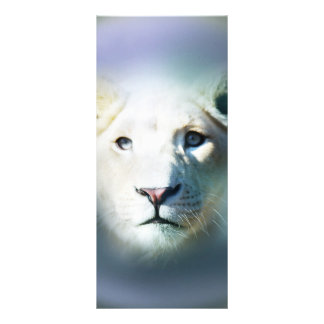 Africa White Lion Blue Eyes Rack Card