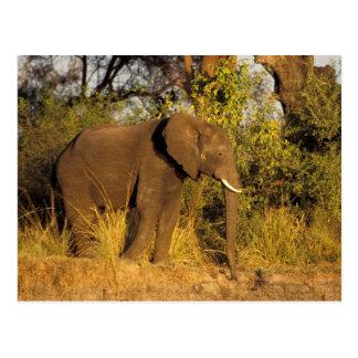 Africa, Zimbabwe, Victoria Falls National Park. Postcard