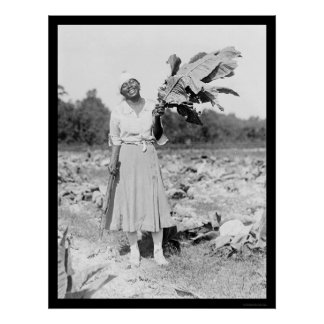 African America Woman with Tobacco 1912 Poster