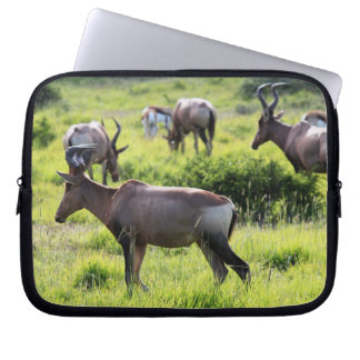 African Antelope on Safari in South Africa Computer Sleeve