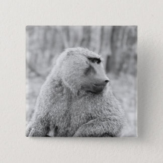 African baboon 2 inch square button