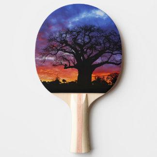 African baobab tree, Adansonia digitata, 2 Ping Pong Paddle