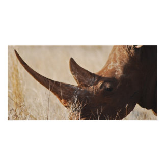 African black rhino with big horns card